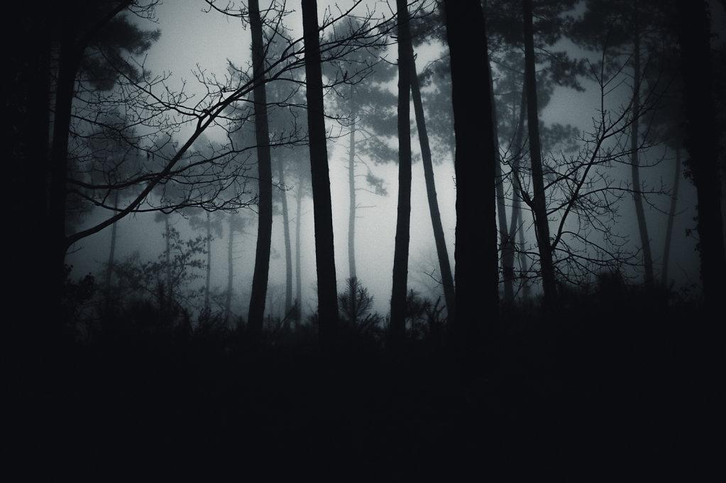 Brouillard-7-sur-1424-decembre-2014.jpg