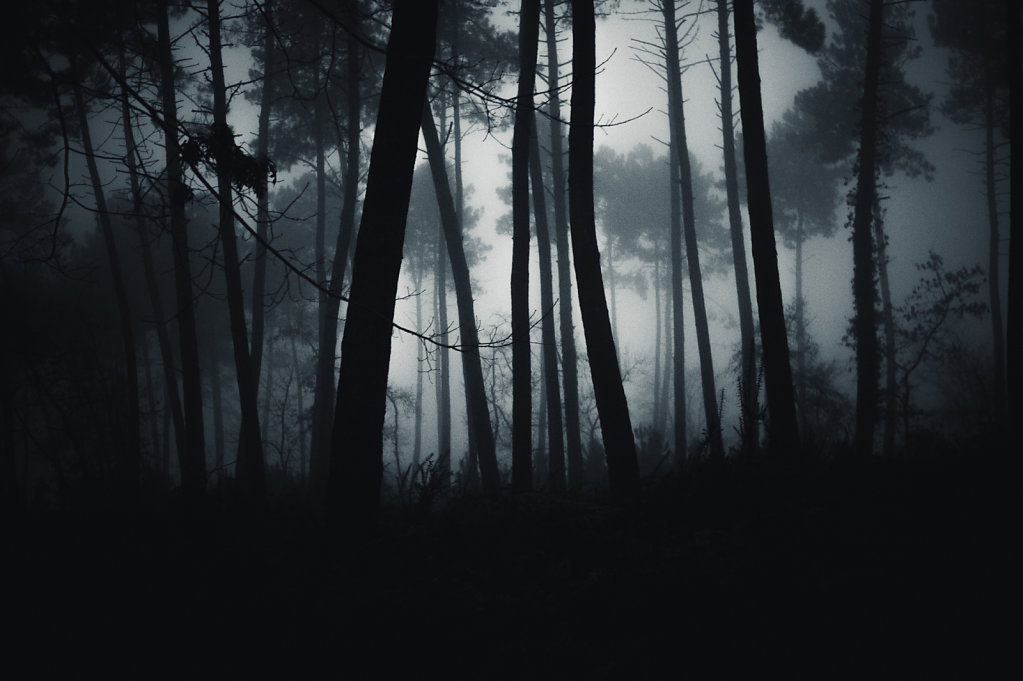 Brouillard-8-sur-1424-decembre-2014.jpg