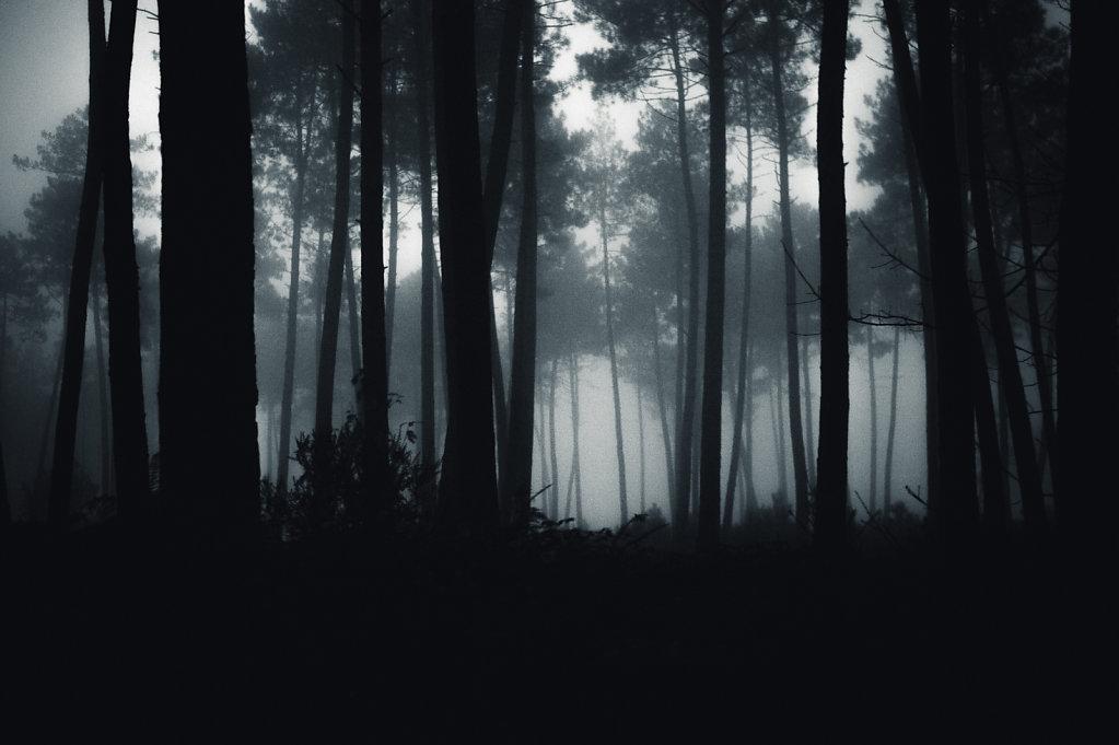 Brouillard-9-sur-1424-decembre-2014.jpg