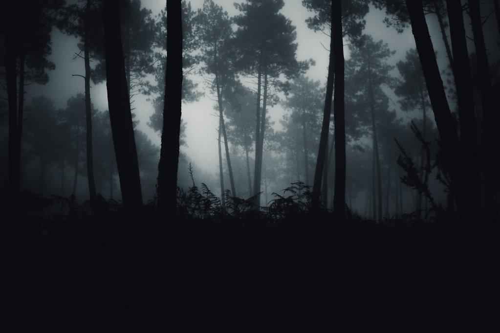 Brouillard-10-sur-1424-decembre-2014.jpg