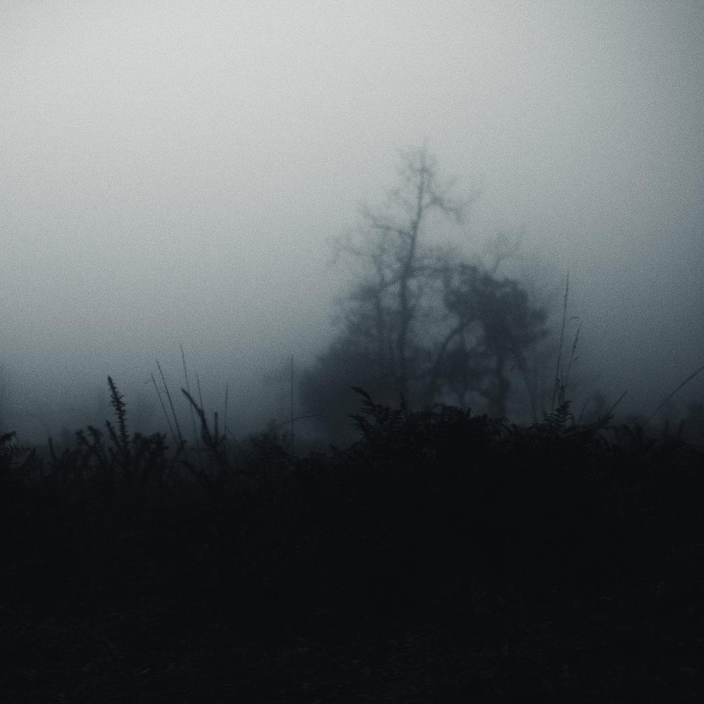 Brouillard-6-sur-1424-decembre-2014.jpg