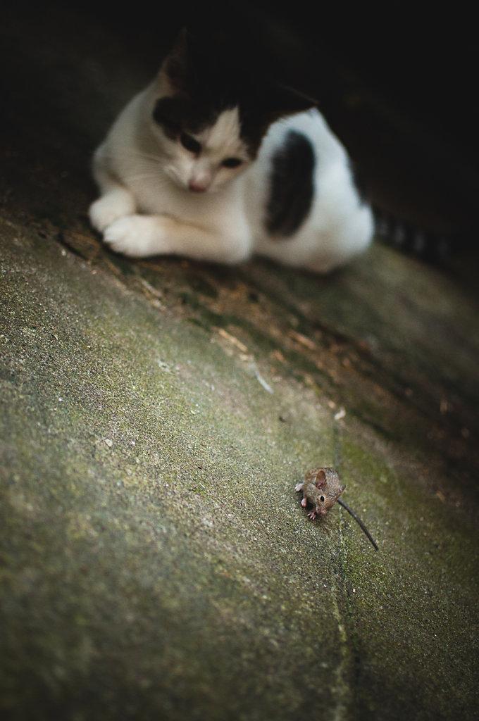 catmouse-0012.jpg
