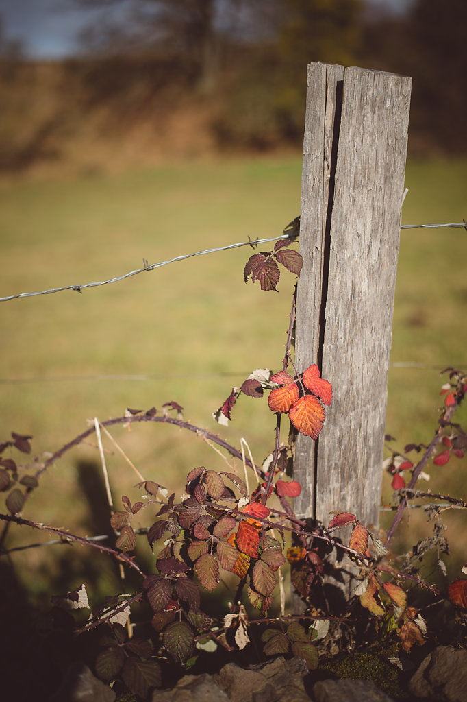 Cantal-5776.jpg