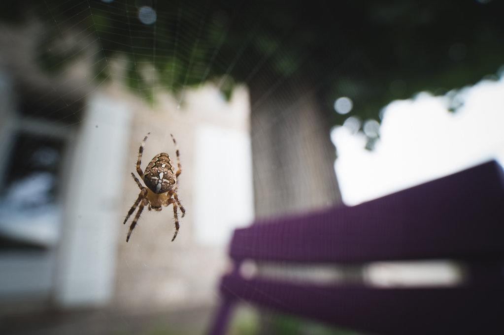 spider-0767.jpg