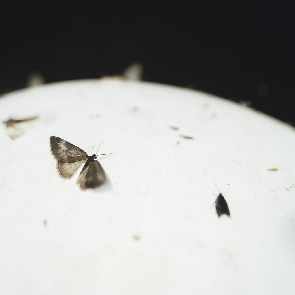 Anas-Bugs-on-the-moon-0735.jpg