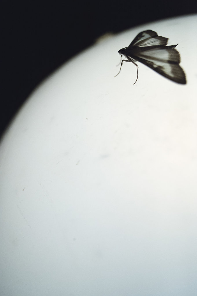 Anas-Bugs-on-the-moon-0783.jpg