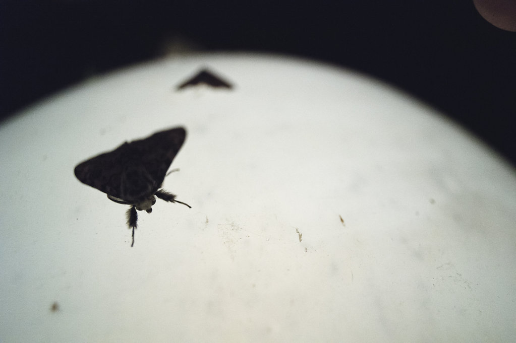 Anas-Bugs-on-the-moon-0793.jpg