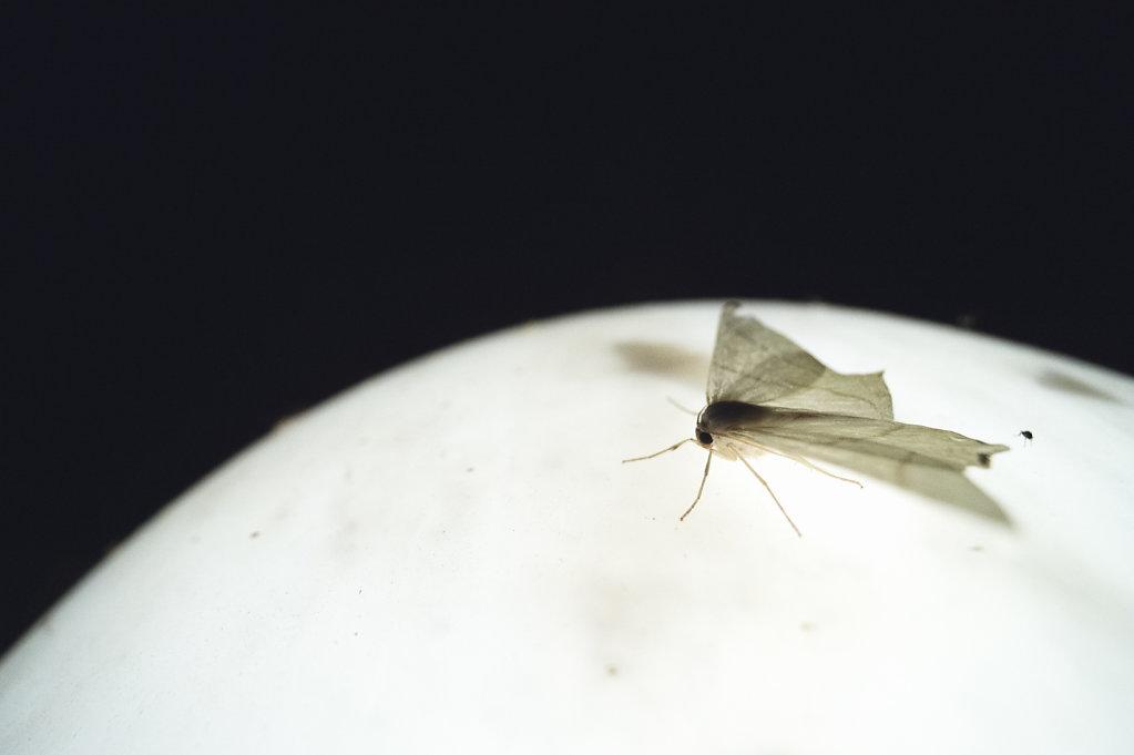 Anas-Bugs-on-the-moon-0894.jpg
