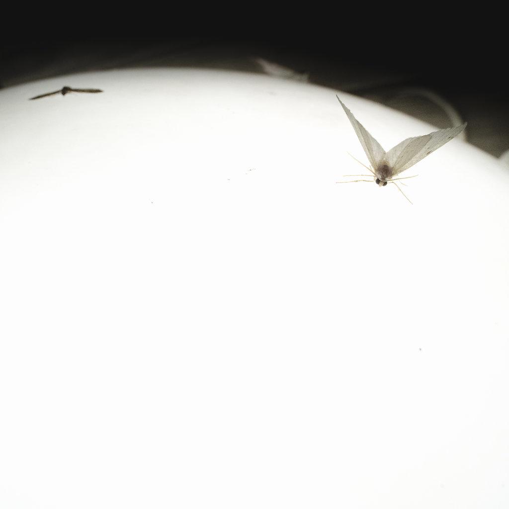 Anas-Bugs-on-the-moon-0907.jpg