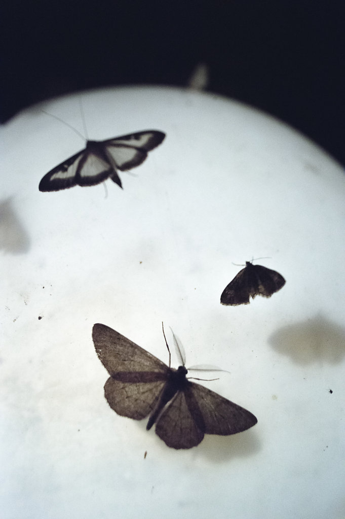 Anas-Bugs-on-the-moon-0937.jpg